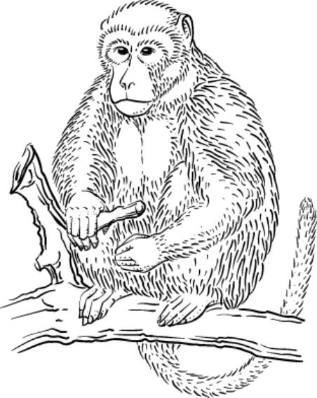 Rhesus Monkey Coloring Page
