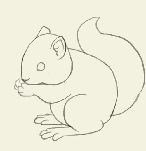 how to draw squirrel learn to draw a cute bunny step by step images