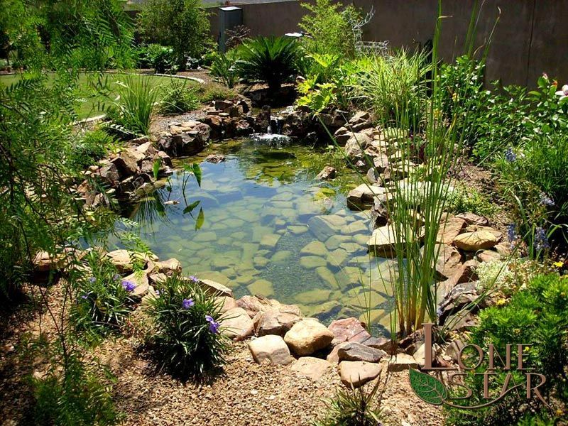 Natural koi pond with waterfall and tropical plants www for Natural koi pond