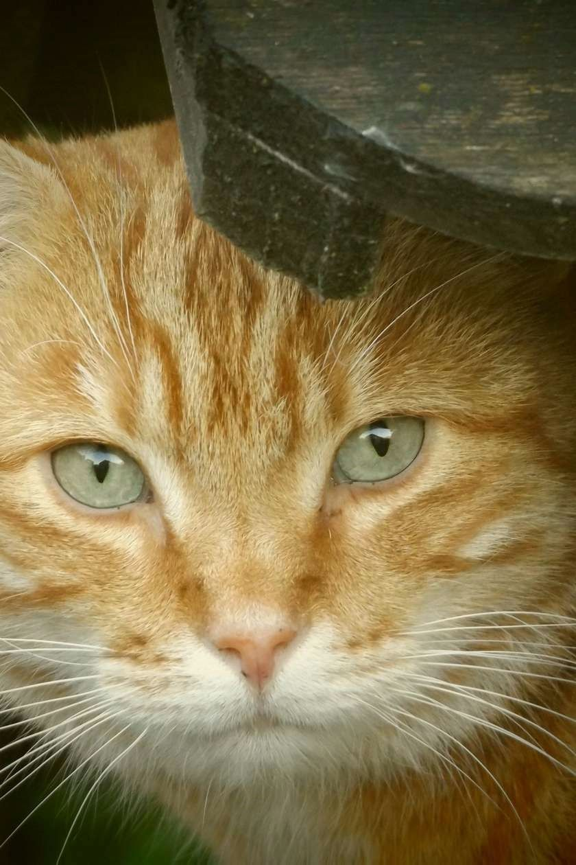 Cat Care With Easy Tips A Cat S Behavior Is Definitely A Elaborate Thing To Comprehend They Re Irritable As Well Cats And Kittens Cat Care Orange Tabby Cats