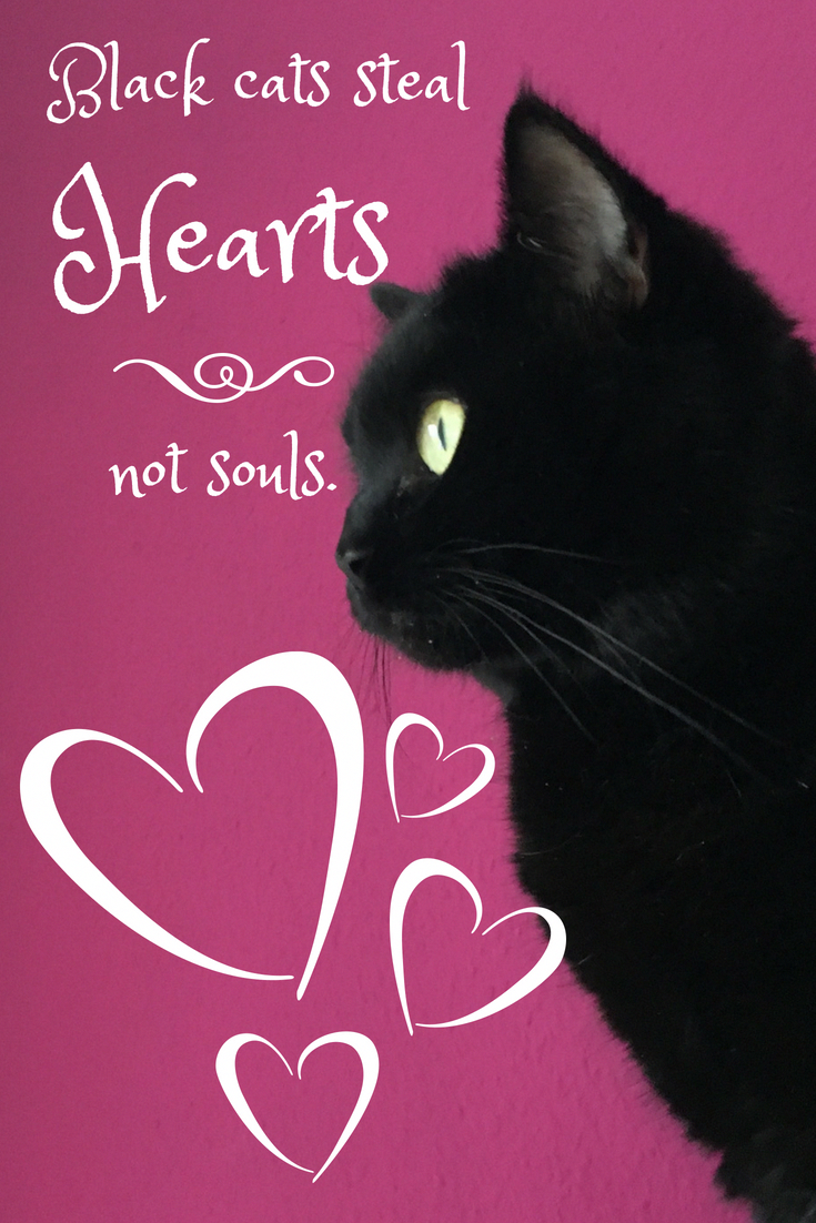Black cats steal hearts not souls. Black Cats In Praise