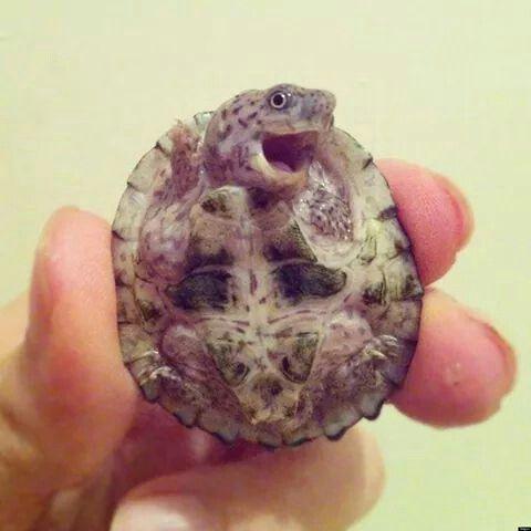 Happy baby turtle