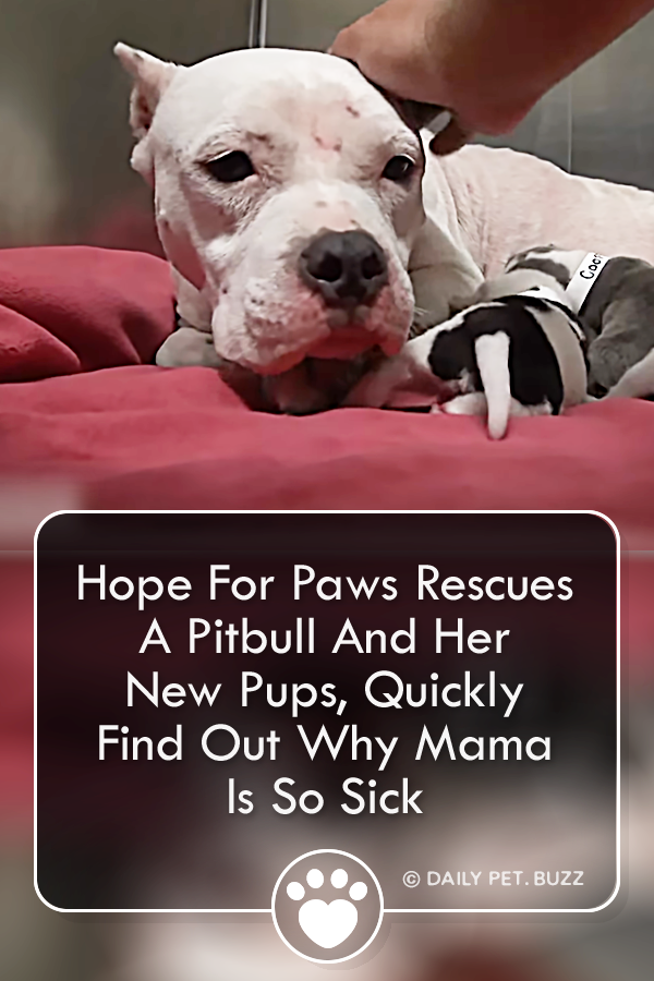 They Rescued A Homeless Momma Dog And Her Pups But What They Find Inside The Dog With Images Animal Rescue Stories Cute Baby Animals Paws Rescue
