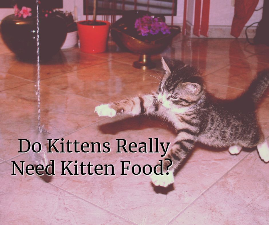 A Look Into A Popular Marketing Ploy Many Brands Use To Get You To Buy Kitten Food Do Kittens Really Need Their Own Label O Kitten Food Cat Nutrition Kittens