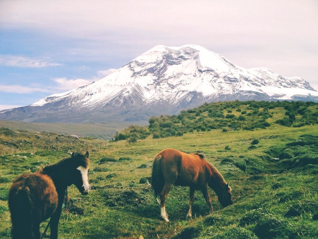 Chimborazo, Ecuador - #America #artists #Chimborazo #Ecuador #fauna #field #horses #Landscape #Latin #lensblr #nature #notes #on #original #photographers #photography #south #travelblr #tumblr #volcano
