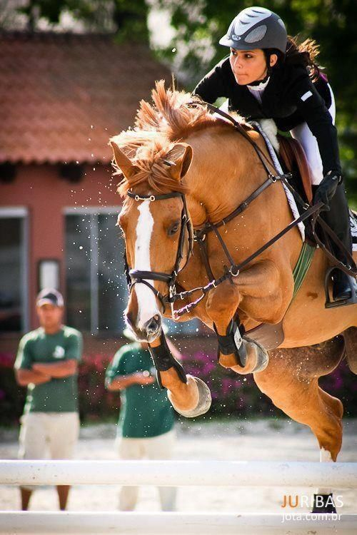 Love this horse's color!!