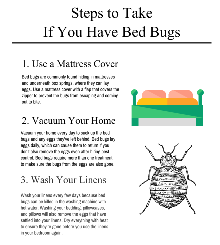 Steps to Take if You Have Bed Bugs [Infographic] Bed