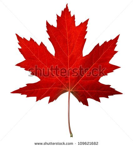 Maple Leaf Canada Tree Leaf Outline Maple Leaf Clipart Clip Art
