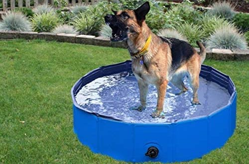 Top 10 Best Portable Foldable Dog Pools For Small Large Dogs Reviews In 2020 Dog Pool Plastic Dog Pool Dog Swimming Pools