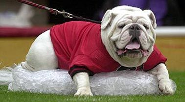 Uga Pretty Cute For Gator Bait Bulldog Crazy Dog Lady