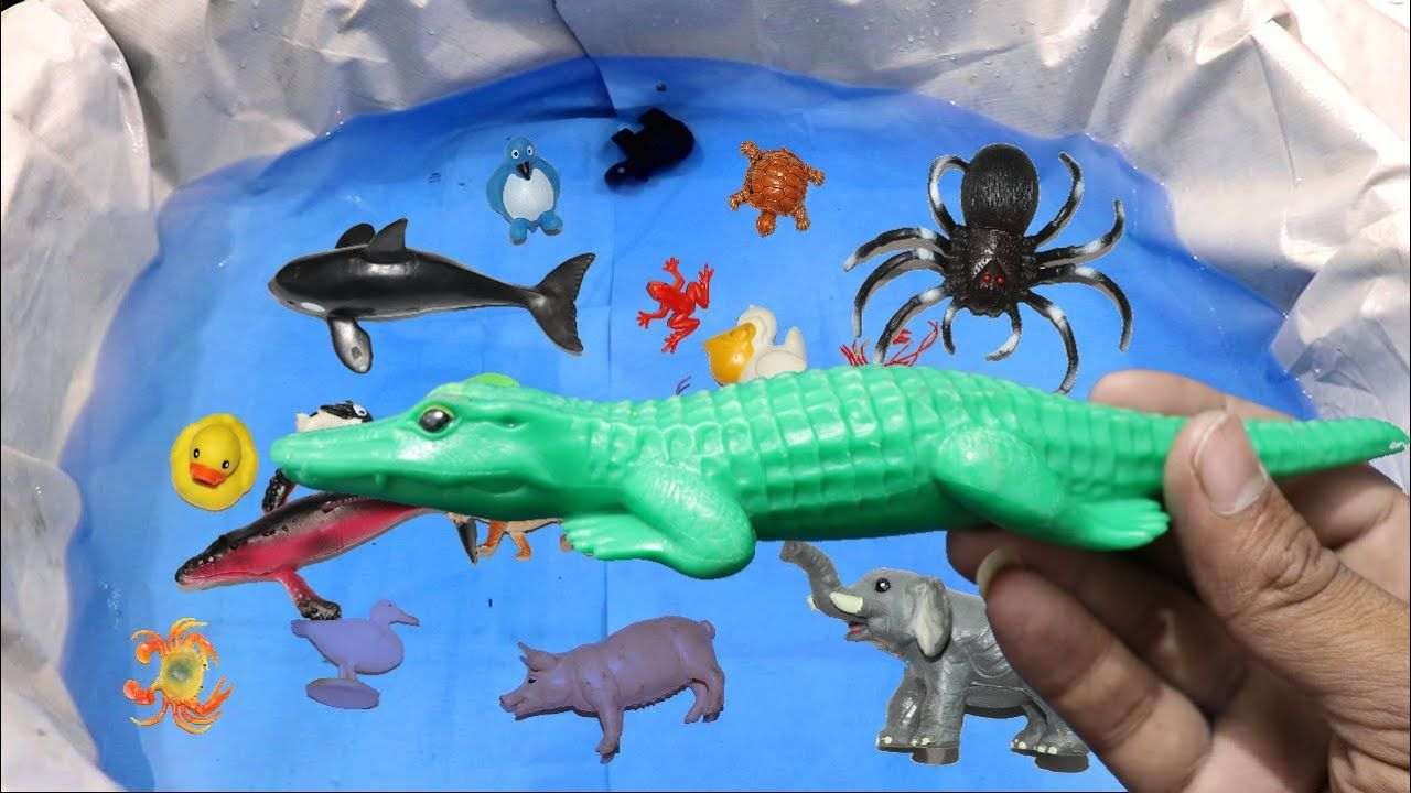 Sea animals and learn wild zoo animal crocodile learn colors video for kids