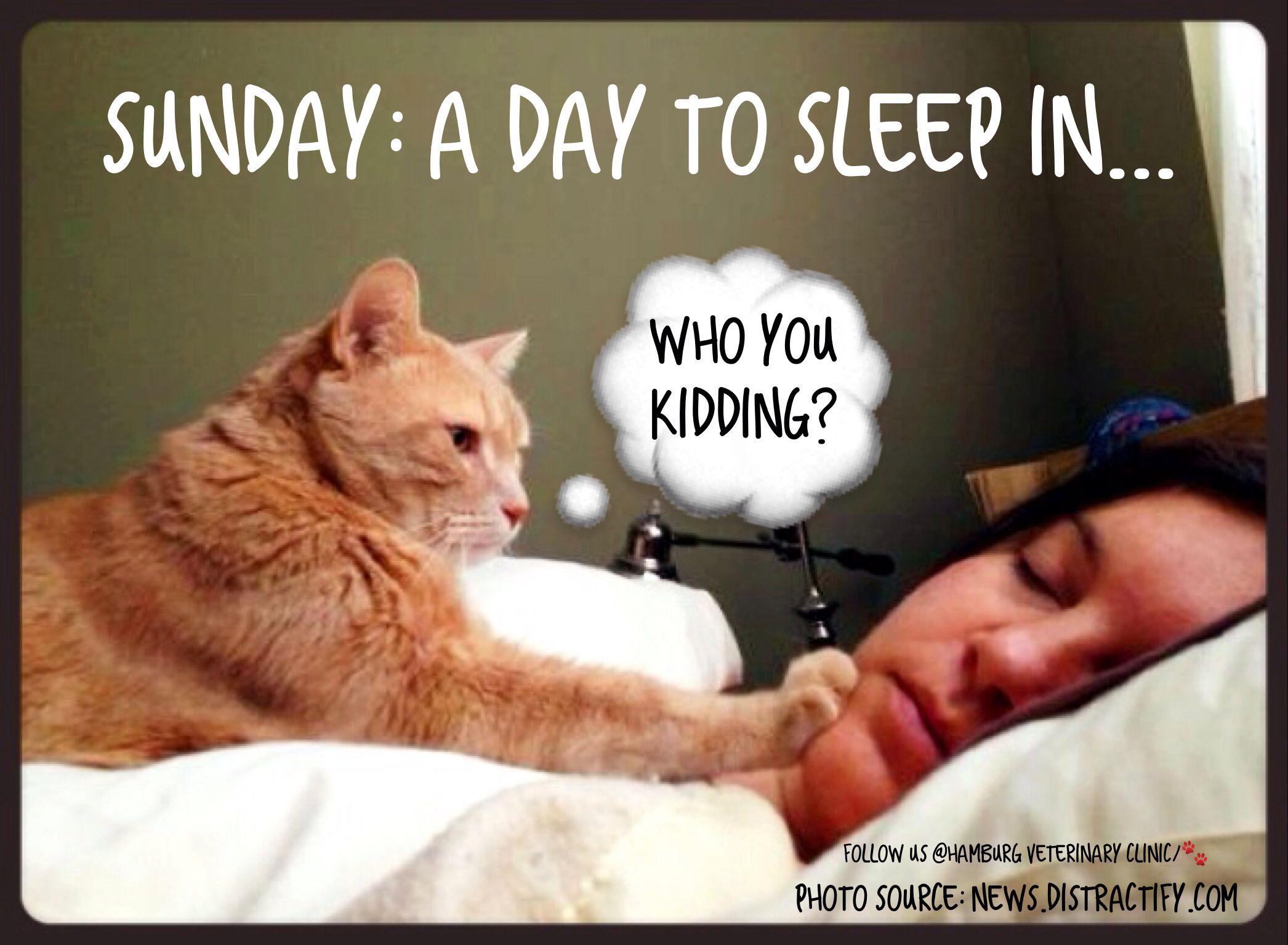 Sunday Morning Funny Meme : Waking up meme cat imgkid the image kid has it