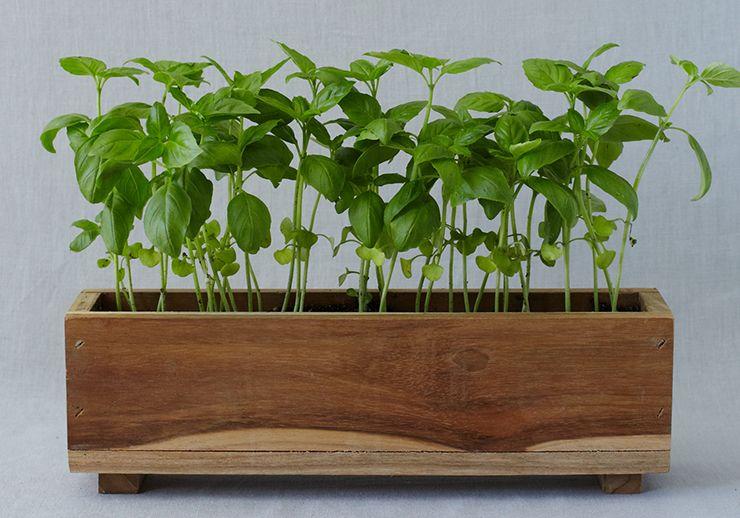 indoor herb box