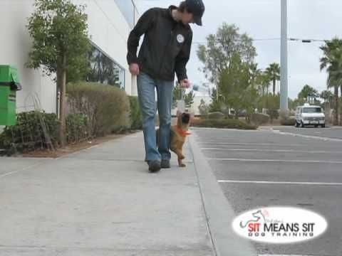 Teaching A Puppy To Heel For The Pups Puppies Training Your