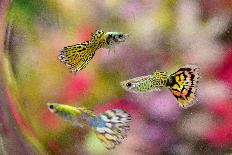 Aquarium fish breeding in bangalore dating