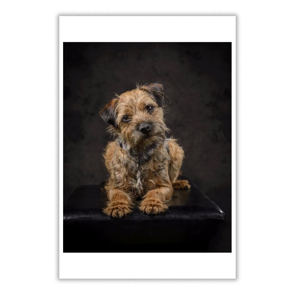 I Love Border Terrier Dog 4 Poster Border Terrier Terrier