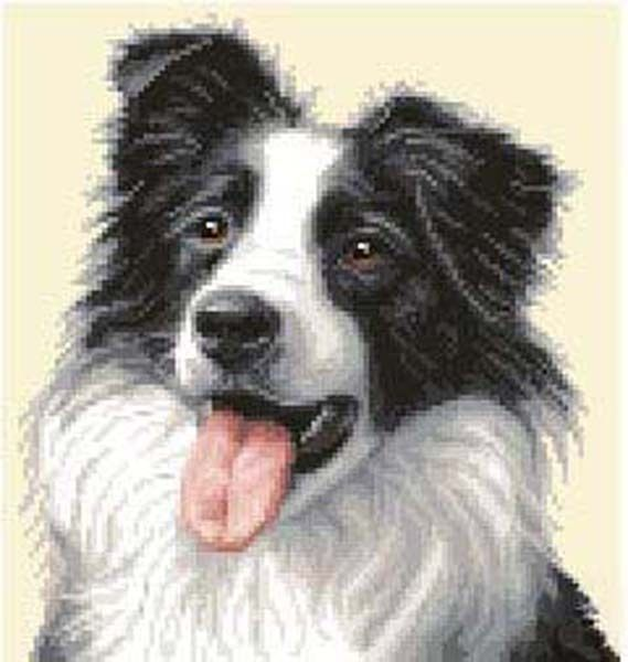 full counted cross stitch kit BORDER COLLIE PUPPY dog