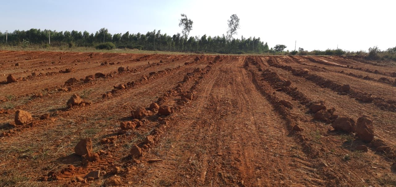 Farm Land in Bangalore Farmland For Sale In Anekal in