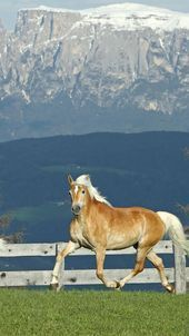Photo of 75 HD Tiere iPhone Hintergrundbilder, #Animalbackgroundiphone #Animals #Backgrou…