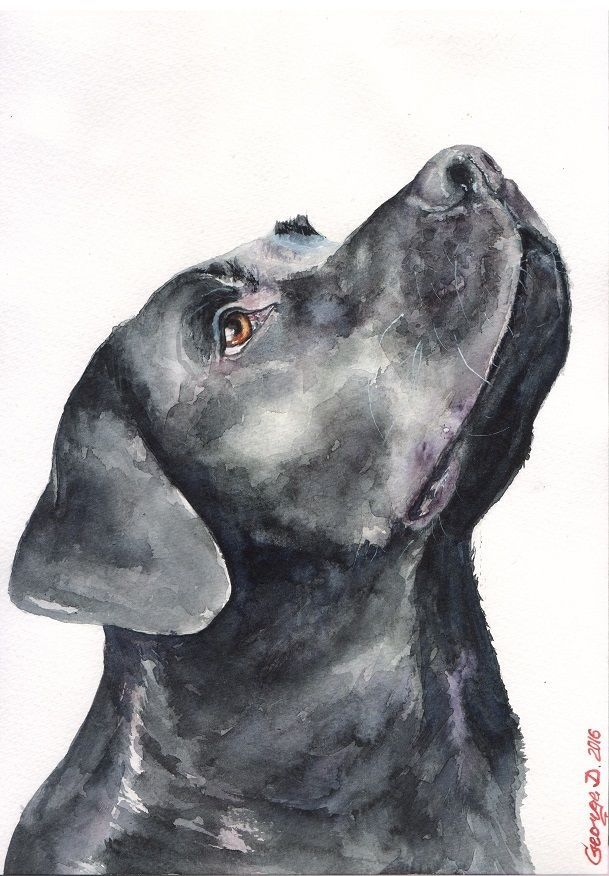 Black Labrador Print Of The Original Watercolor Painting Art Cute