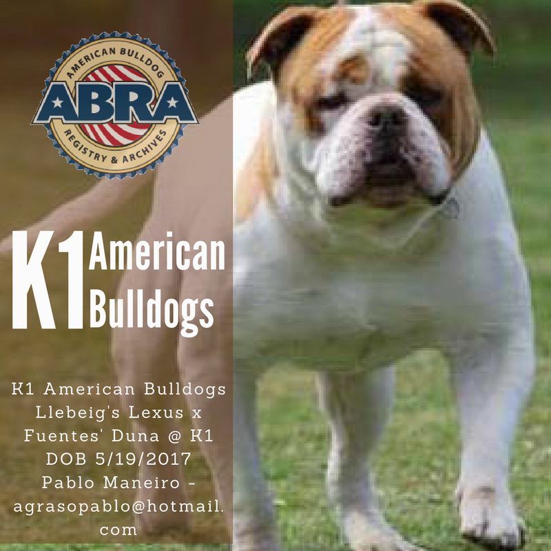 American Bulldog Puppies For Sale Abra American Bulldog Registry Archives American Bulldog Puppies Bulldog Puppies American Bulldog