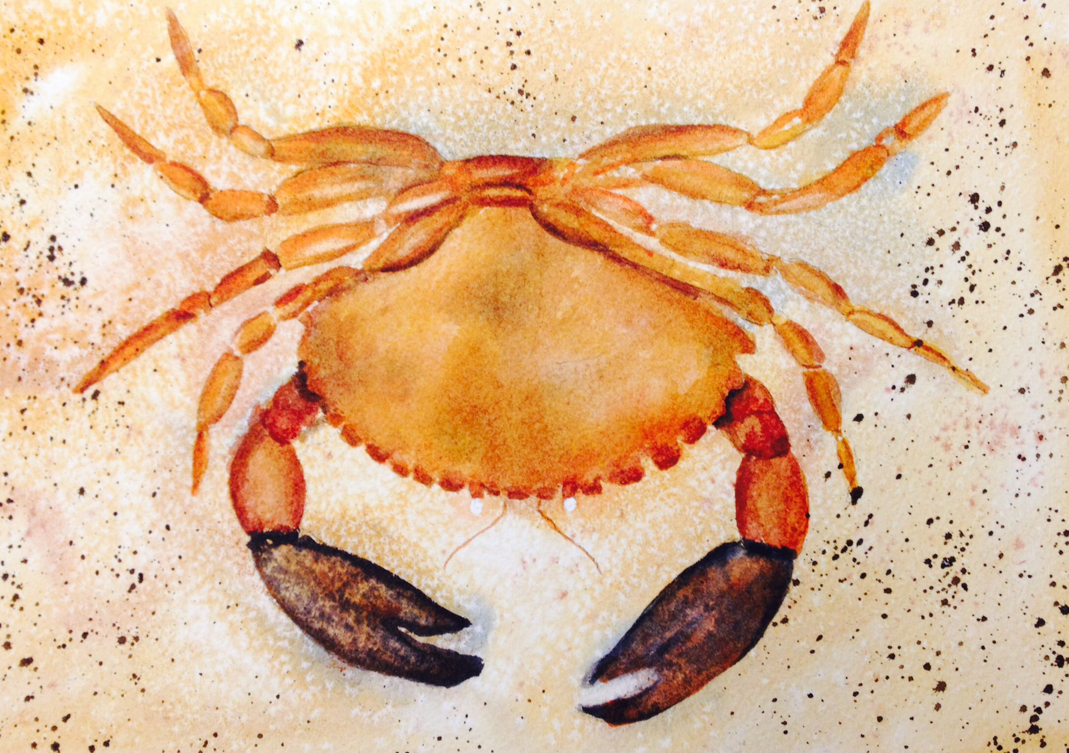Watercolor - a crab I painted.  I used lots of salt, splatters and Quin gold, my favorite color.