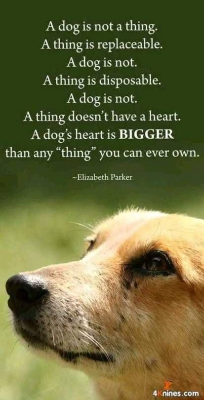 Pin By Terry Jonez On Dog Gone It Dog Quotes Dogs Dog Quotes Love