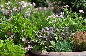 National Gardening Week - Herbs in containers