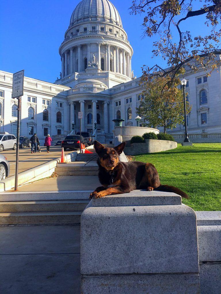 Dog Training Milwaukee Wi Off Leash K9 Training Llc Dog