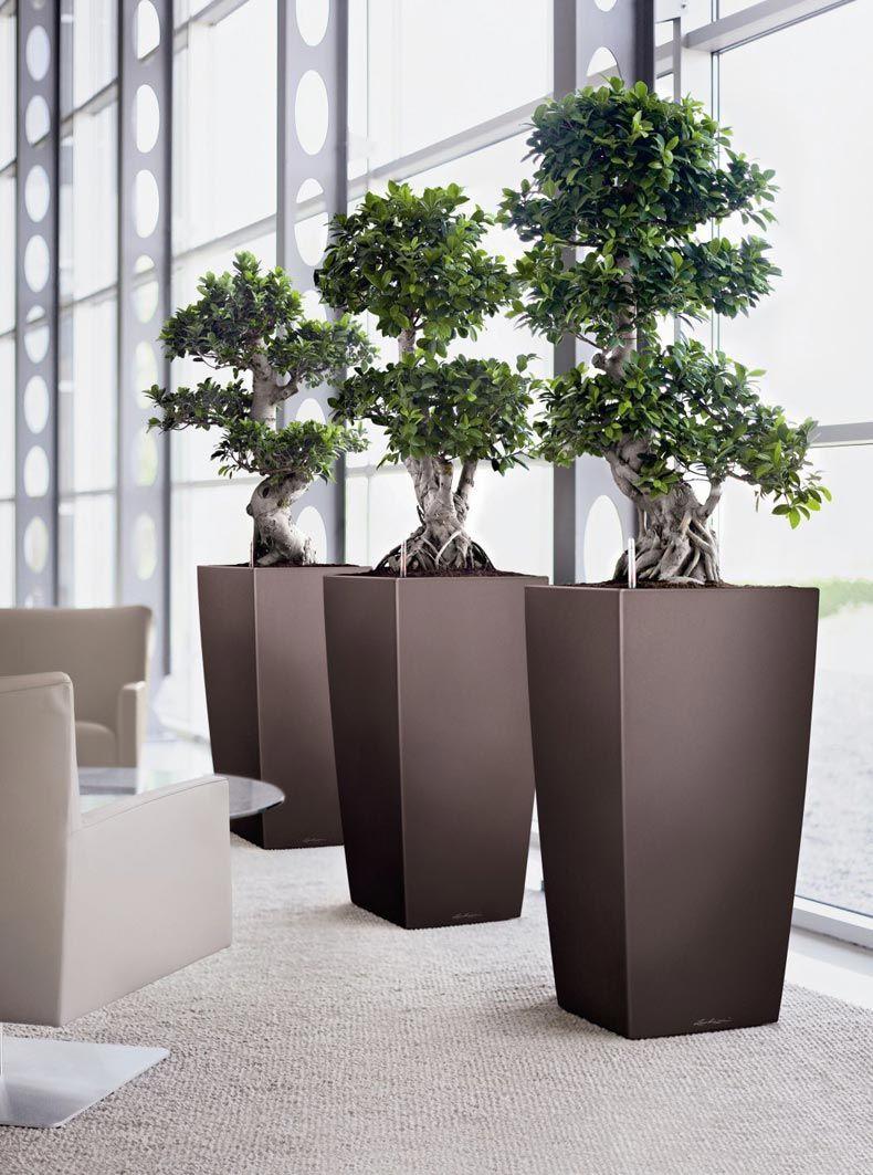 Fabuleux Jardins Bleus - Plantes d'intérieur | Green installation art  AP09