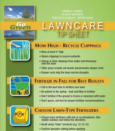 When Should I Fertilize My Lawn During Spring Lawn Fertilizer Lawn Care Lawn Care Tips