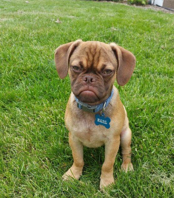 17 Grumpy Puppies Grumpy Dog Puppies Dogs