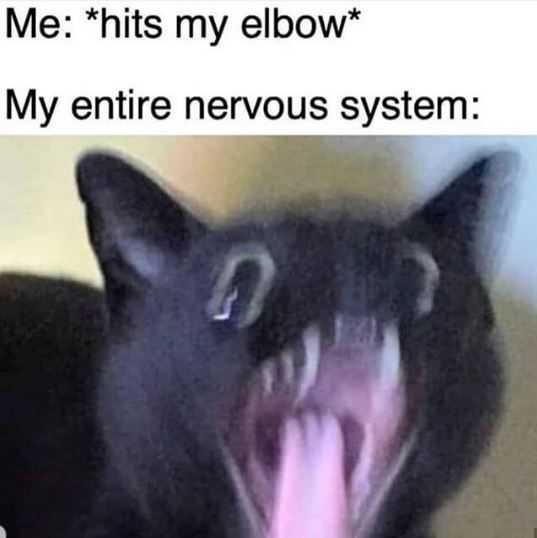 Cat-chy Memes For Another Fantastic Caturday