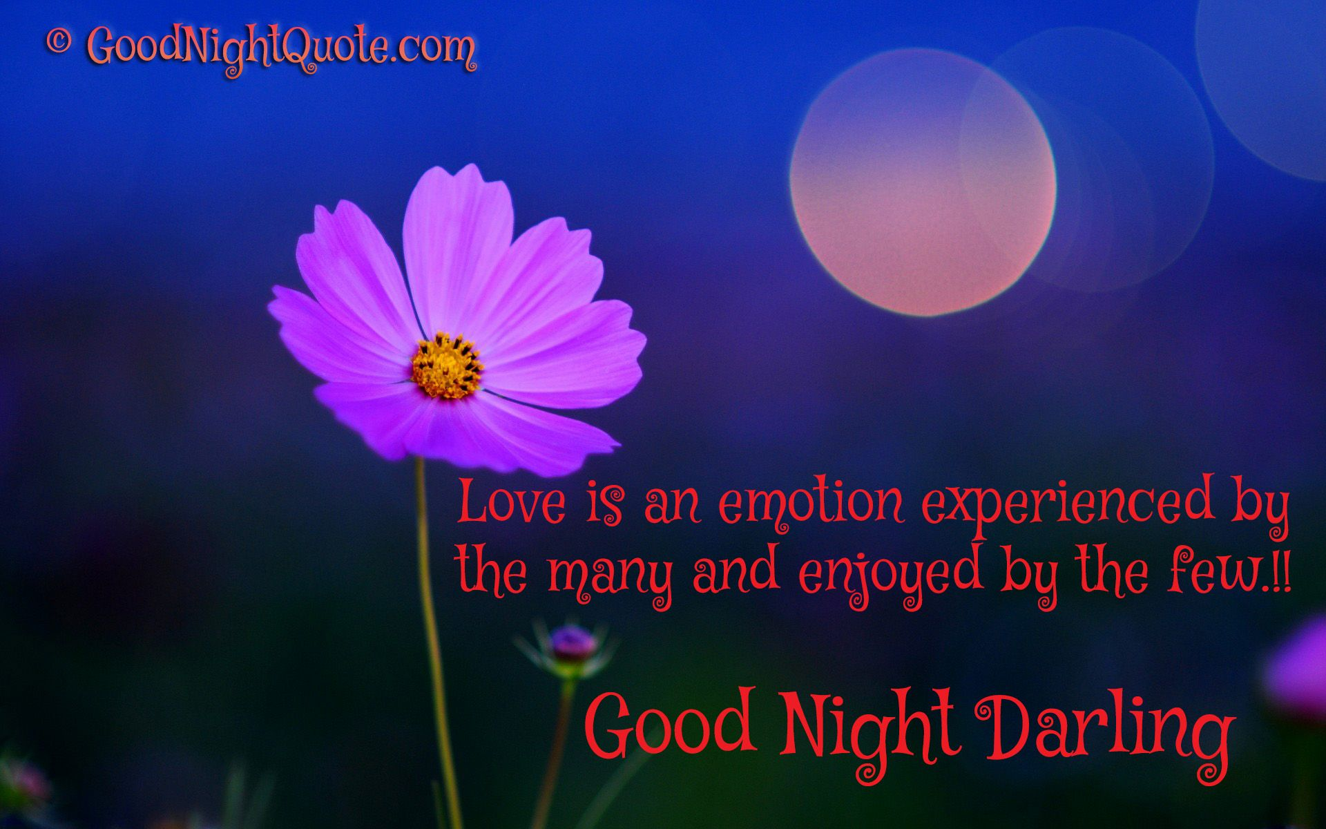Good Night Darling Love Quote For Lover Good Night Quotes And