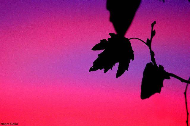 Beautiful Sunset | Flickr - Photo Sharing!