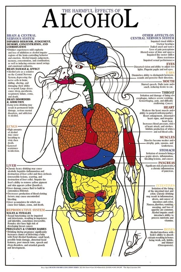 Harmful Effects of Alcohol Chart - Anatomy Models and Anatomical ...