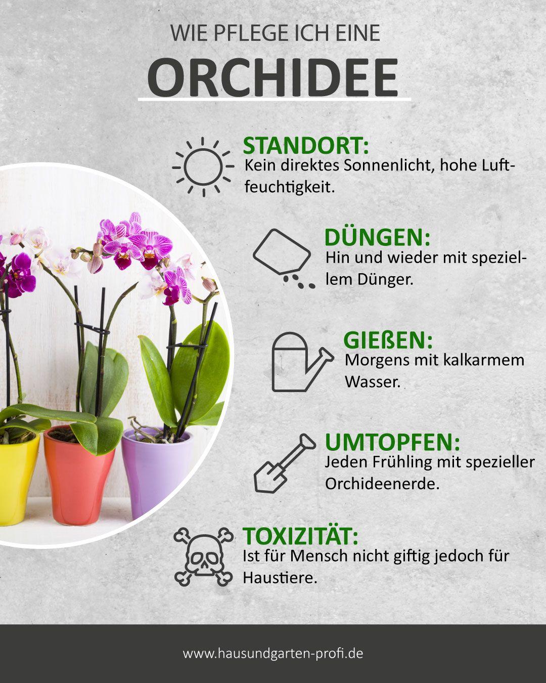 Tipps und Tricks für eine Orchidee zum Thema: (Pflege, Gießen, Düngen, Standort)