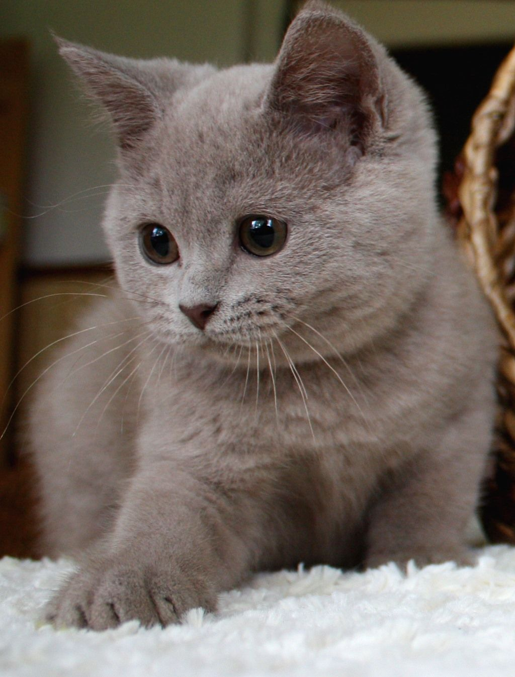 Kitten Backgrounds Baby Animals Funny Cute Cats And Kittens