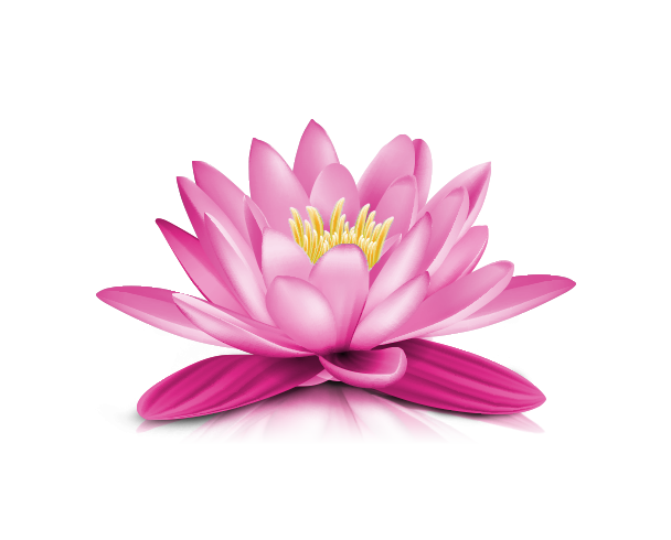 Image result for images for lotus flower with transparent
