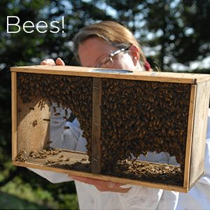 The bees have arrived!