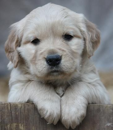 This Face Just Melts My Heart Cute Puppies Beautiful Dogs Cute Animals