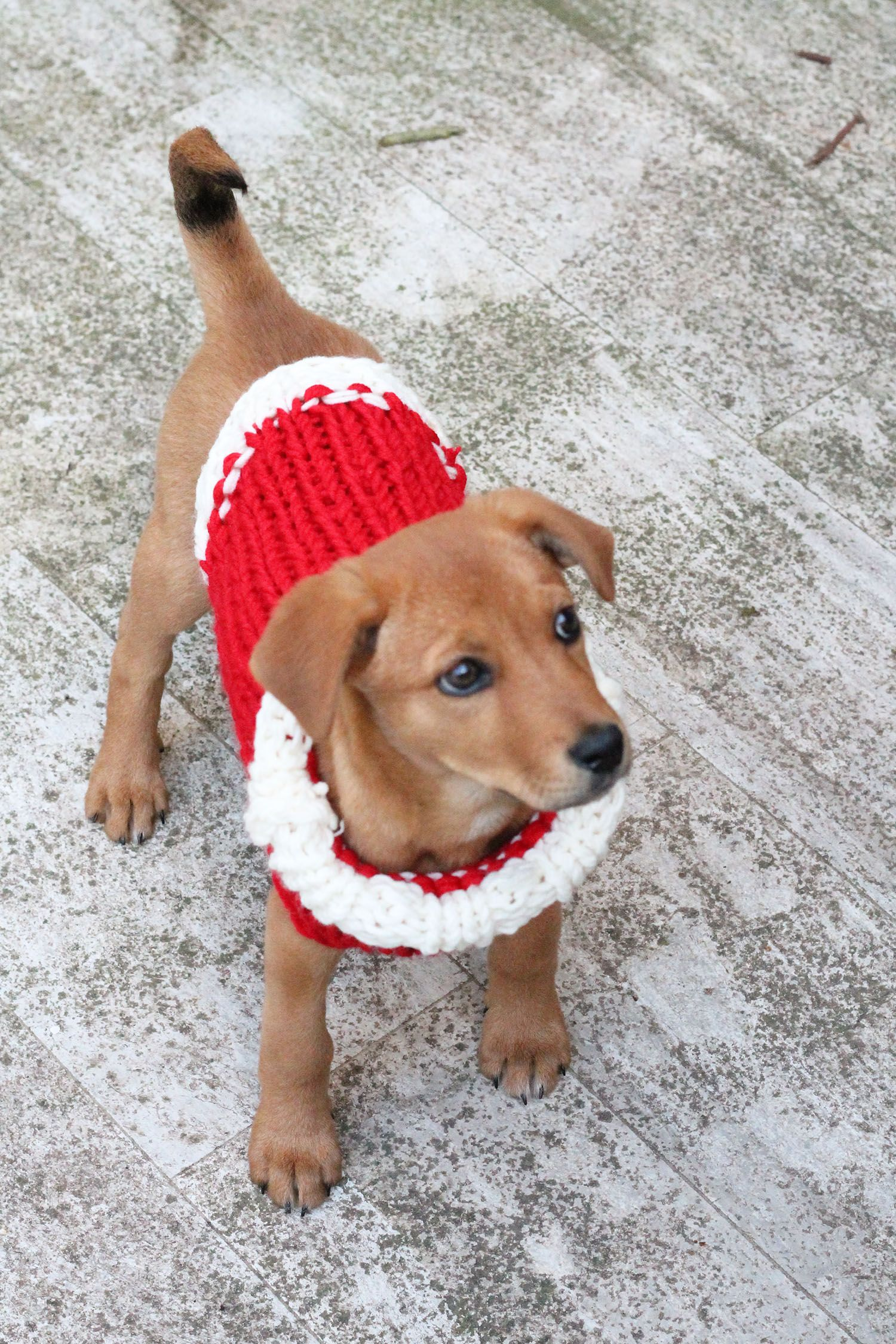 Free puppy Christmas sweater knitting pattern. | total cuteness ...