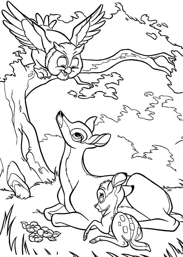 Bambi And Mother Meet An Owl Coloring Pages : Bulk Color