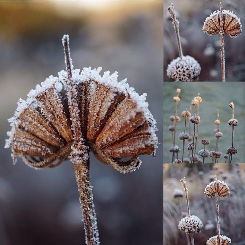 bluebell cottage gdn bluebellcottgdn twitter winter garden