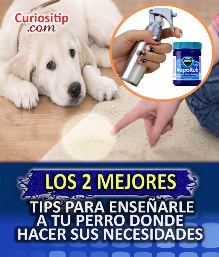 Photo of consejos para educar a tu mascota dónde orinar