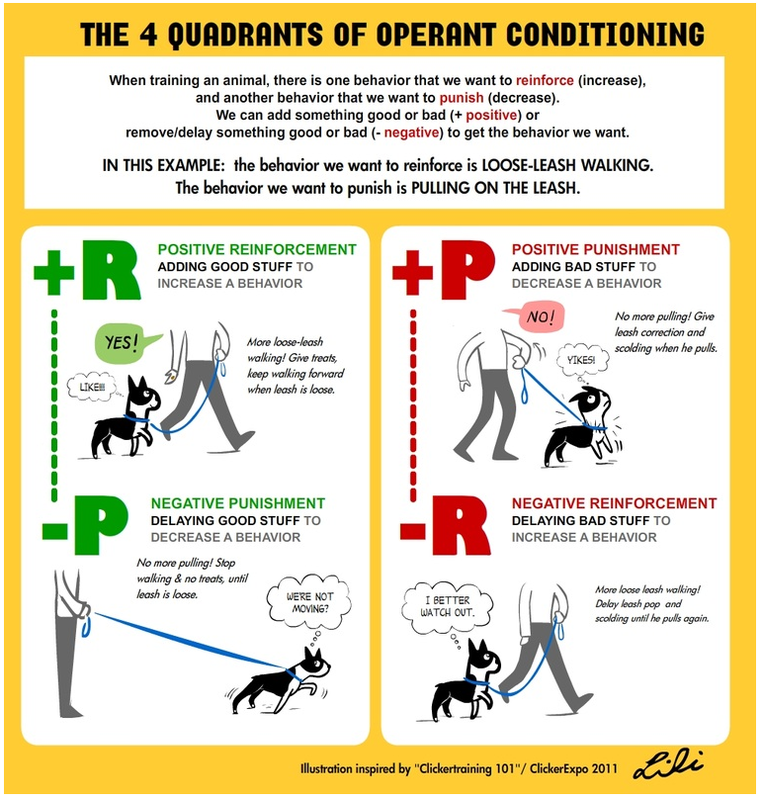 Visual Reinforcers In Dog Training