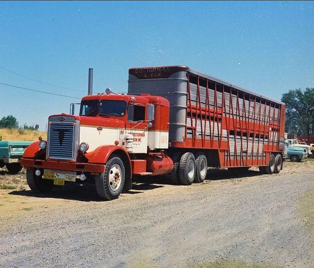Peterbilt Cattle Hauler Peterbilt Peterbilt Trucks Big Rig Trucks