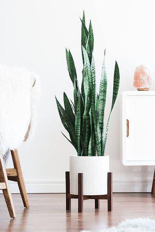 Quelle plante avoir dans la chambre ?