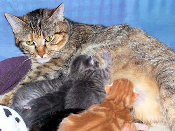 Why Would A Cat Stop Nursing Its Kittens Cat Mom Mother Cat Cats