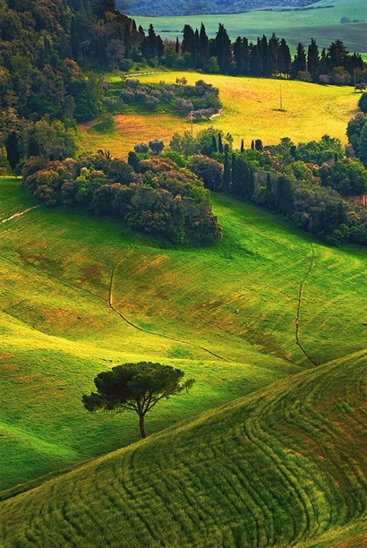 Tuscany Rural Landscape Photograph At Betterphoto Com Ideias De Paisagismo Lugares Incriveis Lugares Bonitos